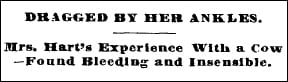 Headline Cow drags woman