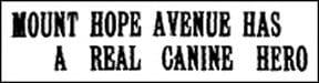 Headline Ti Canine Hero 1935 4W