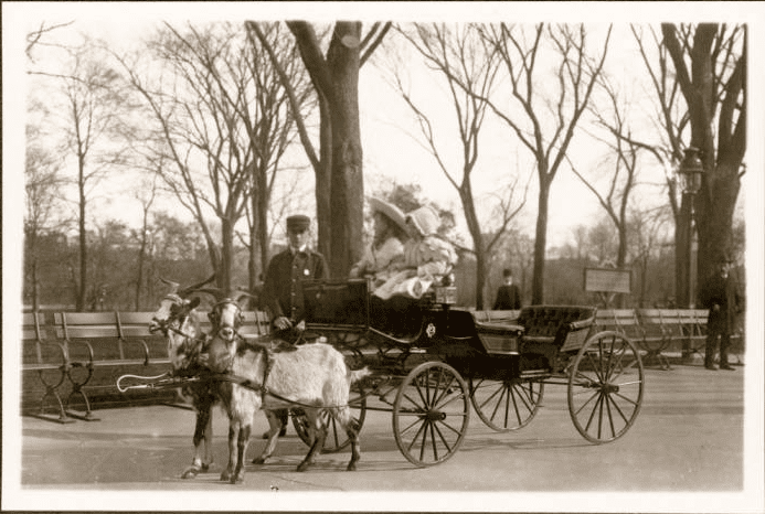 Frank M. Ingalls, 	New York City: two unidentified girls in a goat cart, Central Park, 1908., New-York Historical Society, Photographs From New York City and Beyond