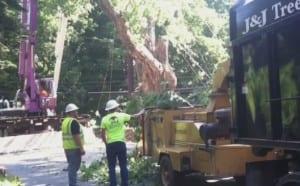 Balmville Tree Newburgh Being Cut Down