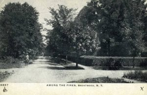 Among_the_Pines_Brentwood_NY