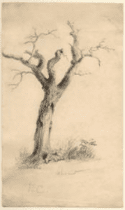 tree by thomas cole