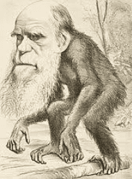satirical cartoon of Darwin