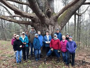2019 woods walk
