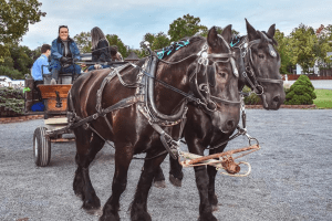 Goshen Historic Track Hayrides courtesy Zaro Celebrations