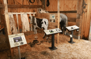 Display in the 1870s restored barn on the Lost Catskill Farm