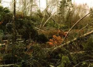 1995 Blowdown in the Adirondacks Courtesy Wildlife Conservation Society