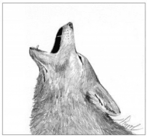 coyote howls by adelaide tyrol