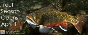 dec trout season