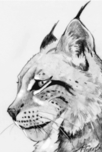 lynx by adelaide tyrol