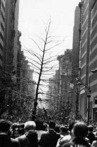 A group of marchers carry a tree on 5th Avenue, as part of Earth Day. New York City, New York. 4/22/70. Courtesy CSU