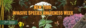 NY Invasive Species Week
