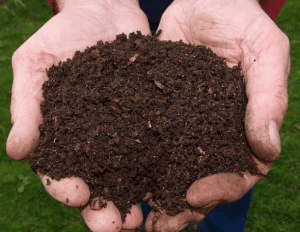 worm composting provided by Cornell
