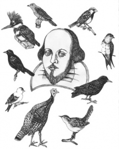 Shakespeares birds